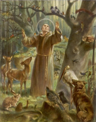 Preaching the gospel. St Francis addresses the animals.